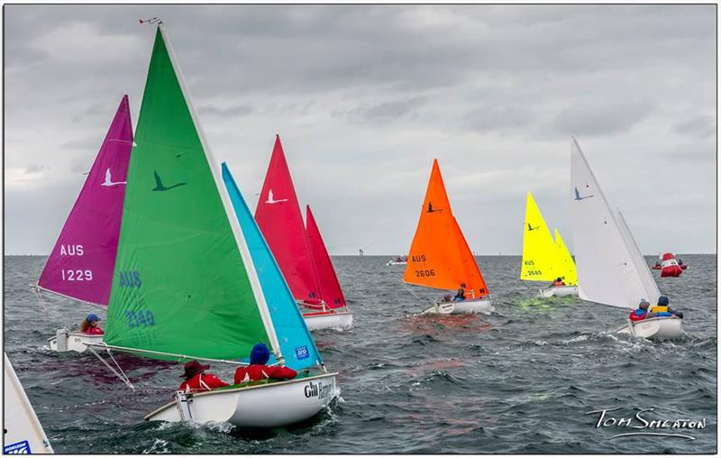 Racing underway in the Gill Combined Hansa Class Asia Pacific Championships - photo © Tom Smeaton