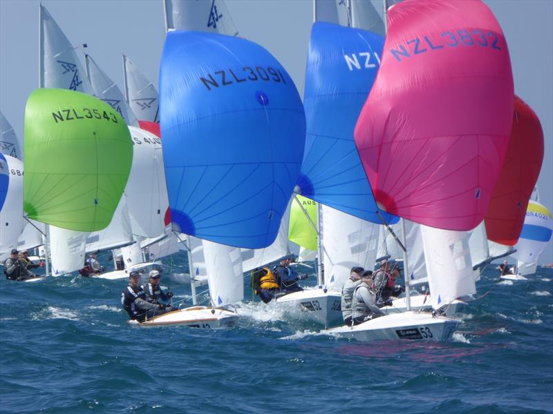 New Zealand teams downwind on the final day of the Flying Fifteen Worlds at Napier - photo © Jonny Fullerton