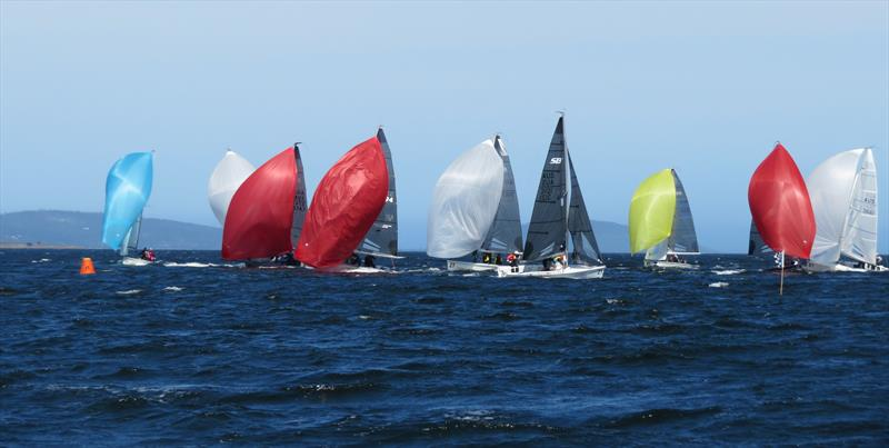The fleet contesting the SB20 Sprint Series in Hobart - photo © Michelley Denney