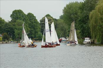 Merlins at Upper Thames