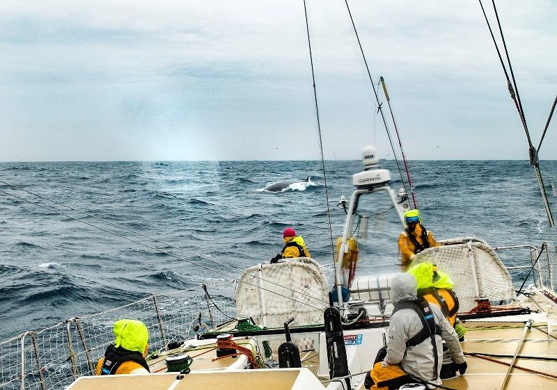Not alone, Zhuhai were joined by some incredible wildlife - The Clipper Race Leg 3 - Race 4, Day 12 - photo © Clipper Race