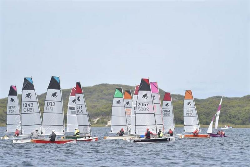 A number of Sabre hulls in Western Australia have converted to the fully-battened and larger mylar 'Shark' sail - photo © Photo supplied