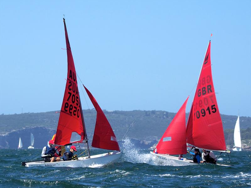 53rd Australian Mirror Nationals and 2019 Pre-Worlds in Sydney photo copyright Robert Owe-Young taken at Woollahra Sailing Club and featuring the Mirror class