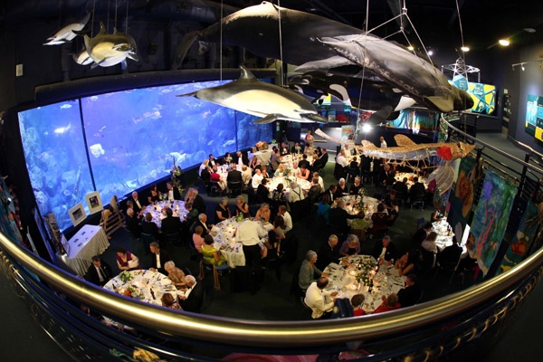 Plymouth Aquarium Announced As Venue For Final Night Of J Cup