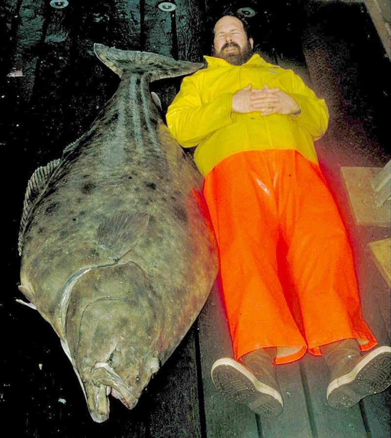An Alaska Fisheries Science Center Researcher next to an Alaskan halibut photo copyright NOAA Fisheries taken at