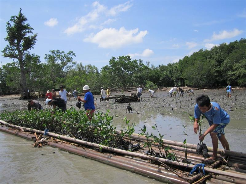 Boris Herrmann started a mangrove reforestation project in the Philippines together with the German-Philippine environmental organization Mama Earth Foundation photo copyright Holly Cova taken at