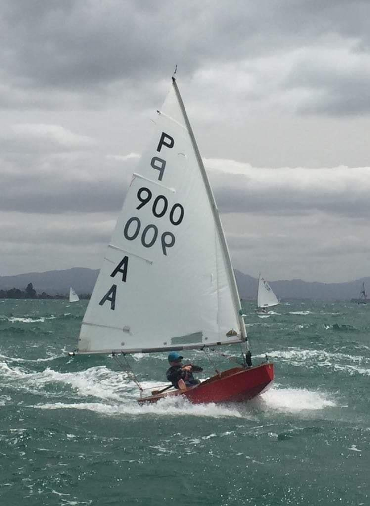 George Cole-Baker -  P class - Tanner Cup - Tauranga Yacht and Power Boat Club - January 2019 - photo © Tauranga Yacht and Power Boat Club