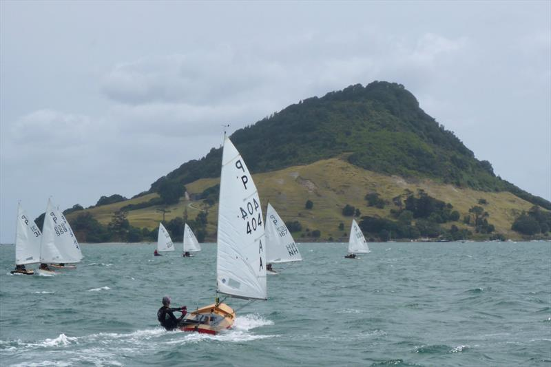 Tim Howse (404) - Day 1 - P class - Tauranga Cup - Tauranga Yacht and Power Boat Club - January 2019 - photo © Tauranga Yacht and Power Boat Club